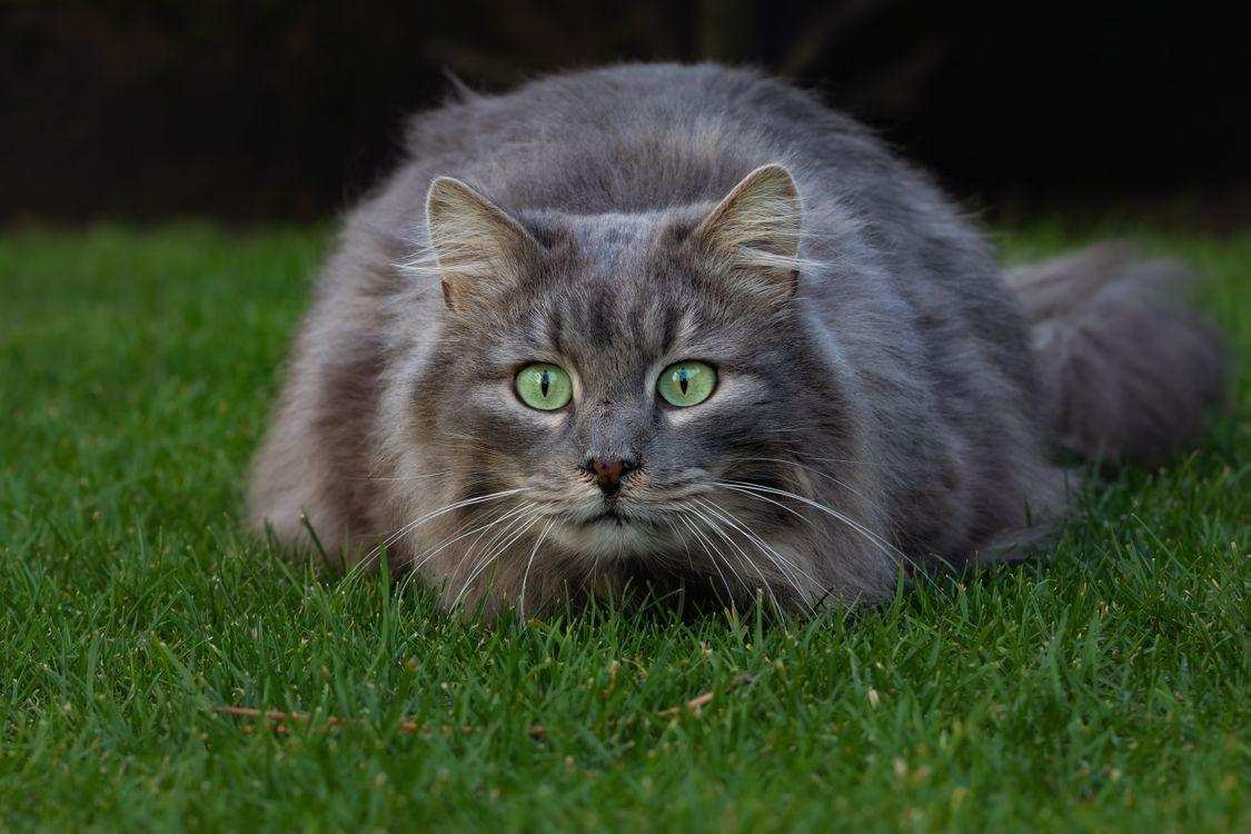 Фото бесплатно кот, кошка, животное, морда, взгляд, кошки - скачать на рабочий стол