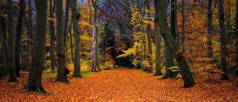 Бесплатные фото осень,лес,деревья,природа,пейзаж,осенние краски,панорама