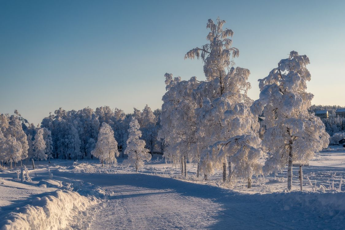 Фото бесплатно Зимняя дорога, дорога, деревья - на рабочий стол