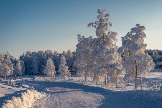 Фото бесплатно зимняя дорога, зима, дорога