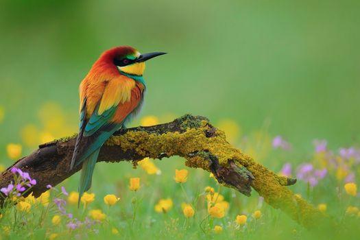 Фото бесплатно пчелоед, цветок, птица, зеленый, Национальный географический, природа, обои