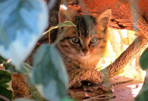 Фото бесплатно кот, домашние питомцы, животные