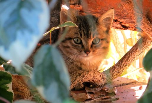 Бесплатные фото кот,домашние питомцы,животные,домашние животные,глаза,котенок,природа,милый,нежная,коты,фауна,млекопитающее