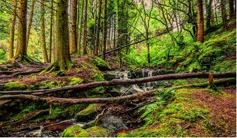 Фото бесплатно деревья, камни, мох