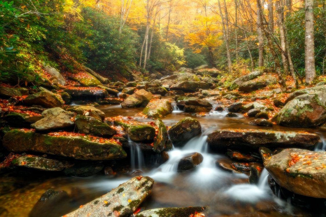 Фото бесплатно осень, речка, ручей, камни, лес, деревья, водопад, природа, пейзаж, краски осени, пейзажи