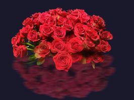 Бесплатные фото розы,цветы,букет,роза чёрный фон,флора