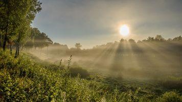 Бесплатные фото утро,туман,рассвет,поле,деревья