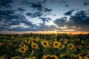 Фото бесплатно небо, пейзаж, закат