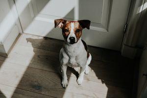Бесплатные фото животное,собака,щенок,домашнее животное,мили,свет,настроение