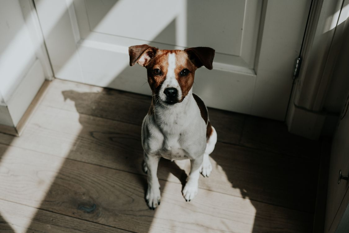 Обои животное, собака, щенок, домашнее животное, мили, свет, настроение картинки на телефон