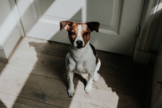 Фото бесплатно животное, собака, щенок