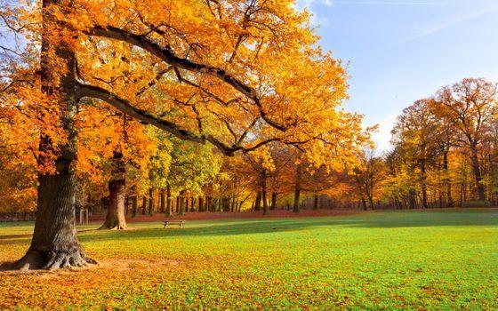 Photo free autumn, foliage, golden