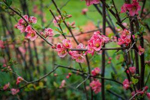 Фото бесплатно цветущая ветка, весна, цветы
