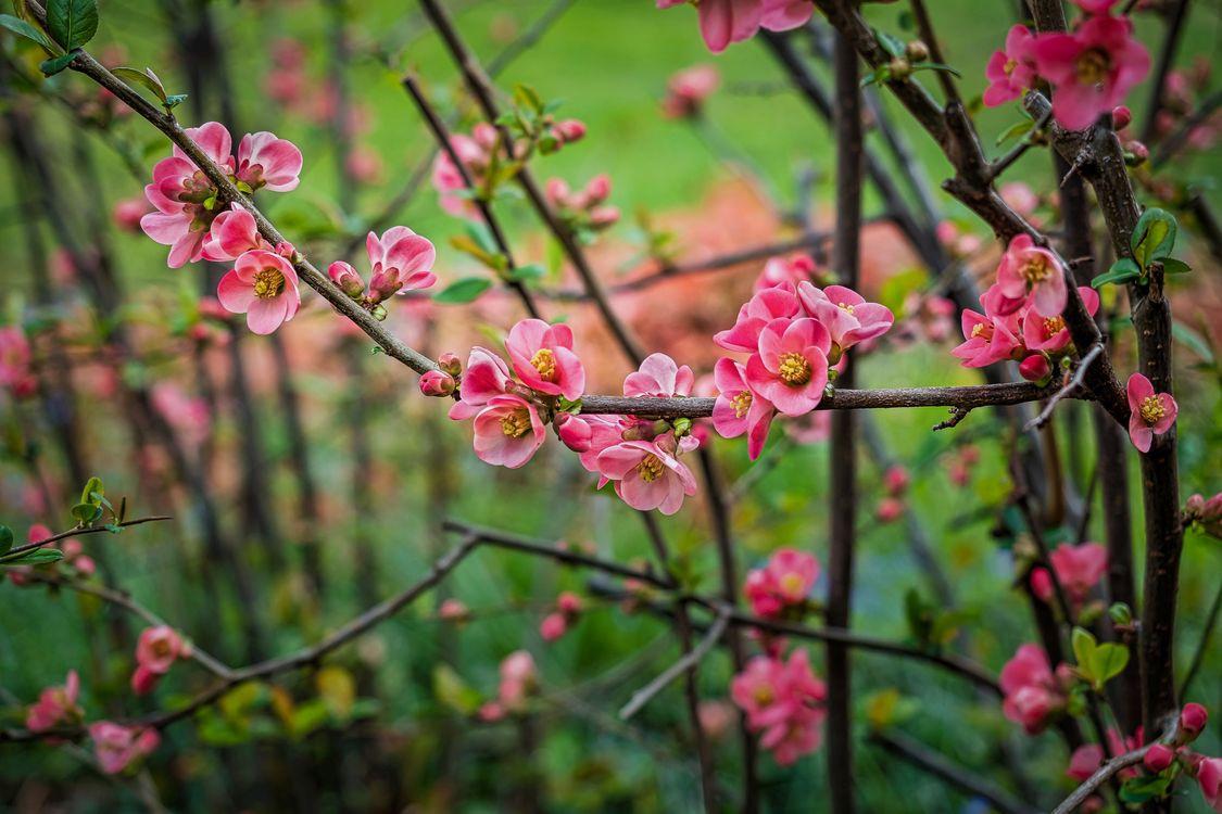 Free photo flowering branch, spring, flowers - to desktop