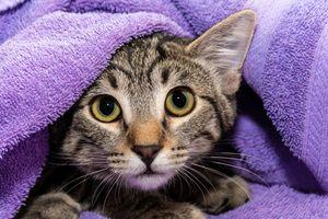 Фото бесплатно кот, лицо, животное