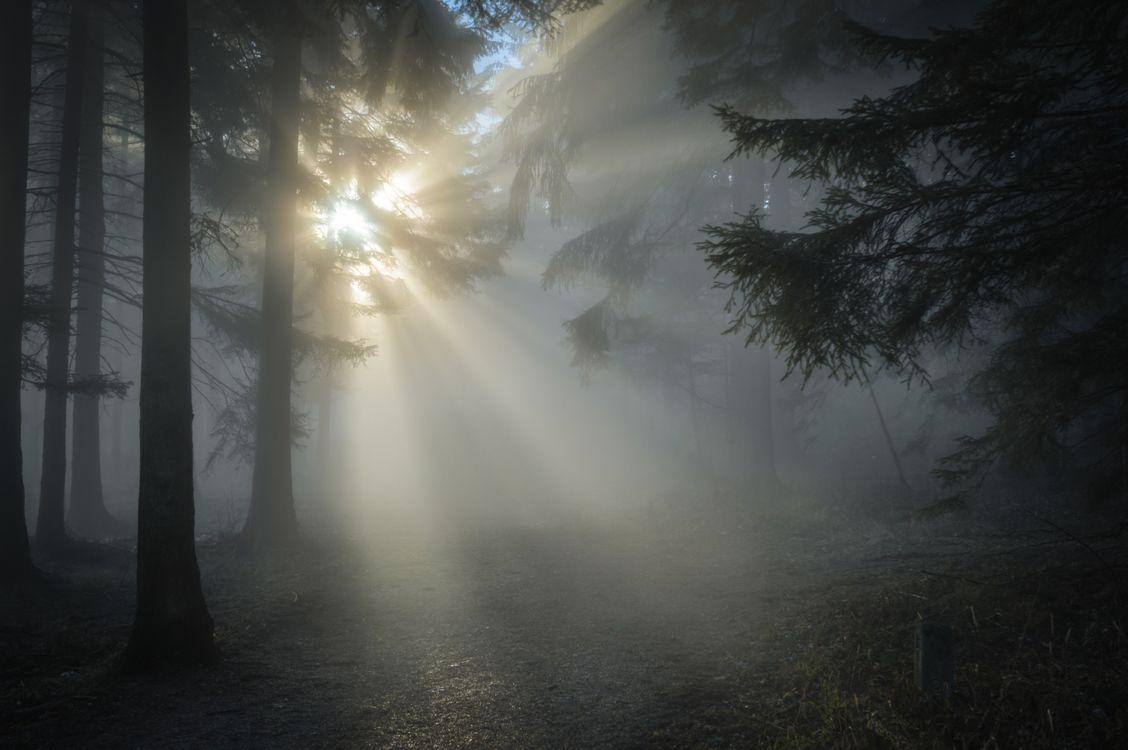 Фото погода атмосферное явление лес - бесплатные картинки на Fonwall