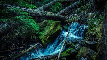 Бесплатные фото водопад,ручей,речка,лес,камни,брёвна,мох