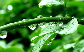 Фото бесплатно капли, зеленый, Листья