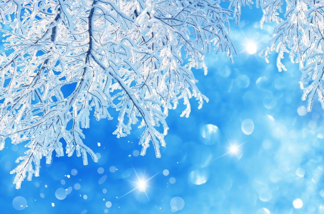 Зимние ветки дерева · бесплатное фото