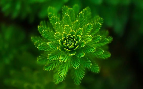 Photo free leaves, green leaves, plants