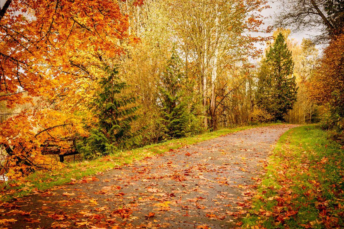 Фото бесплатно осень, деревья, листва, осенние листья, природа, пейзаж, осенние краски, дорога, осенняя дорога, пейзажи