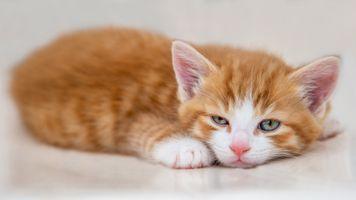 Очаровательный рыжий котёнок
