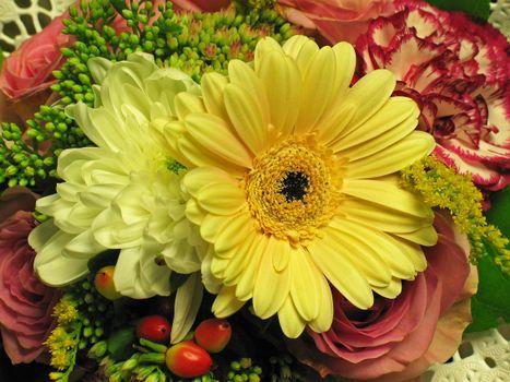 Заставки флора, цветы, оригинал