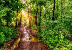 Фото бесплатно солнечный свет, пейзаж, лужи