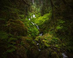 Бесплатные фото Quinault,washington,olympic national park,водопад лес,деревья,речка,ручей