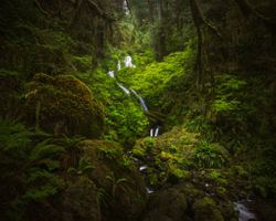 Photo free Quinault, washington, olympic national park
