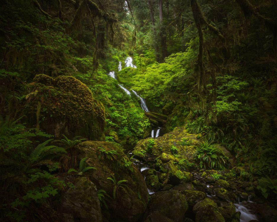 Обои Quinault, washington, olympic national park картинки на телефон