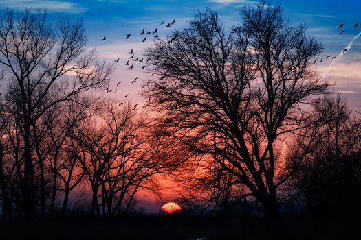 Фото бесплатно закат, деревья, силуэты