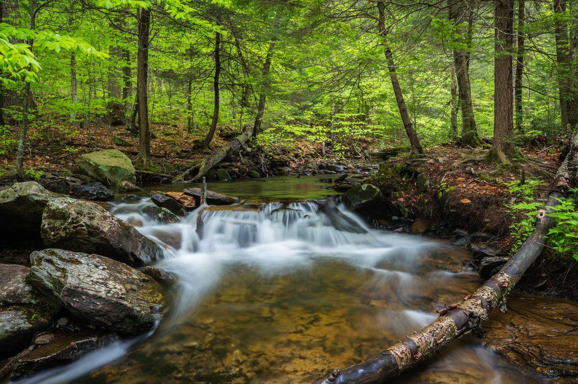 Old Creek · free photo
