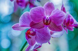 Фото бесплатно макро, орхидея, цветы