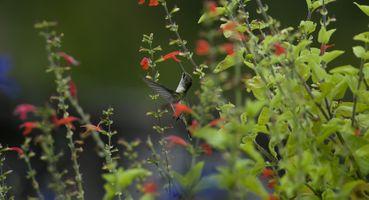 Фото бесплатно макро, птица, цветы