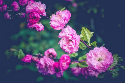 цветущая ветка,цветы,весна,цветение,цвет