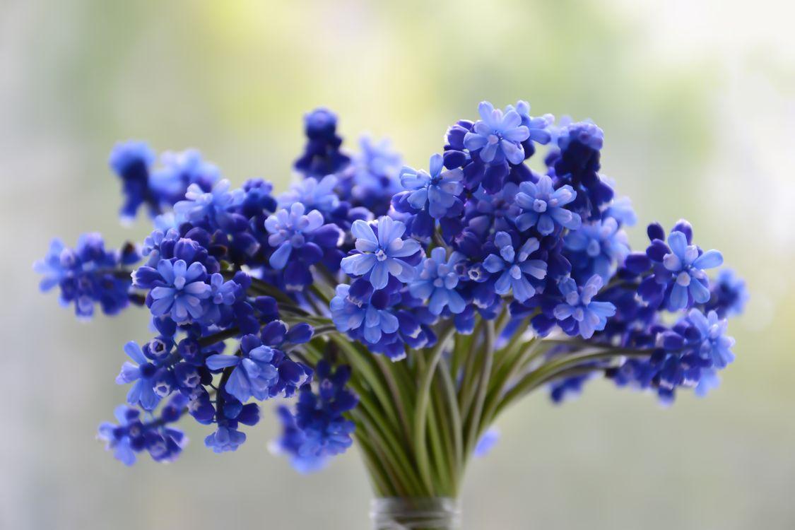 Free photo cucumber family, lavender, hyacinth - to desktop