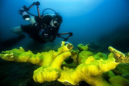 Фото бесплатно риф, камера, Куба