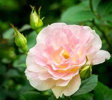 Фото бесплатно флора, макро, листья