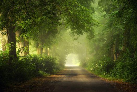 Photo free scenic view, trees, walkway