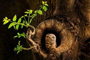 Заставки дерево,сова,дупло,ночь,природа