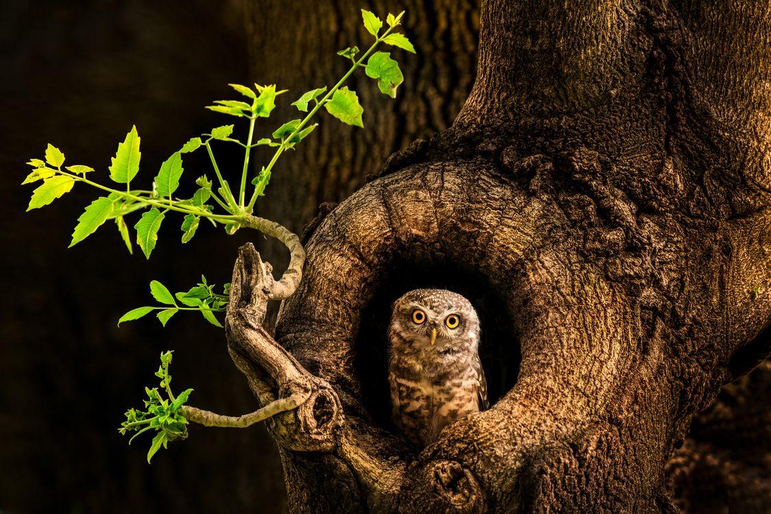 Обои дерево, сова, дупло, ночь, природа картинки на телефон