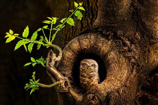 Бесплатные фото дерево,сова,дупло,ночь,природа