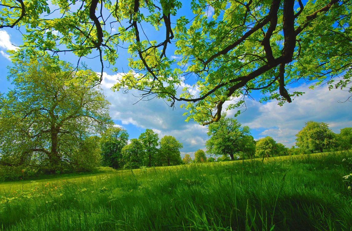 Фото бесплатно поле, трава, природа - на рабочий стол