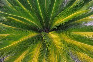 Фото бесплатно листья, природа, пальма