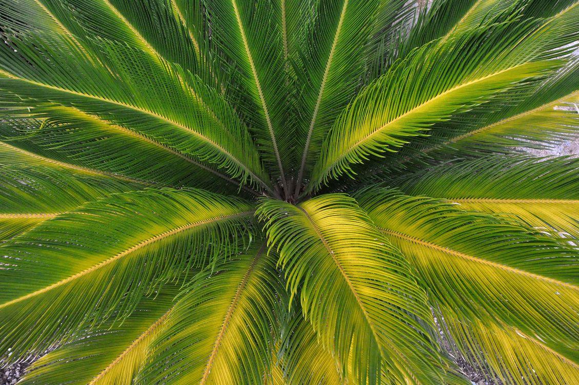 Фото бесплатно листья, природа, пальма - на рабочий стол