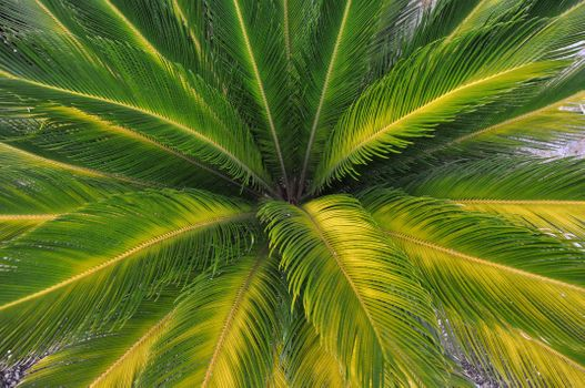 Photo free leaves, nature, palm