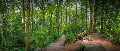 Фото бесплатно панорама, деревья, тропинка