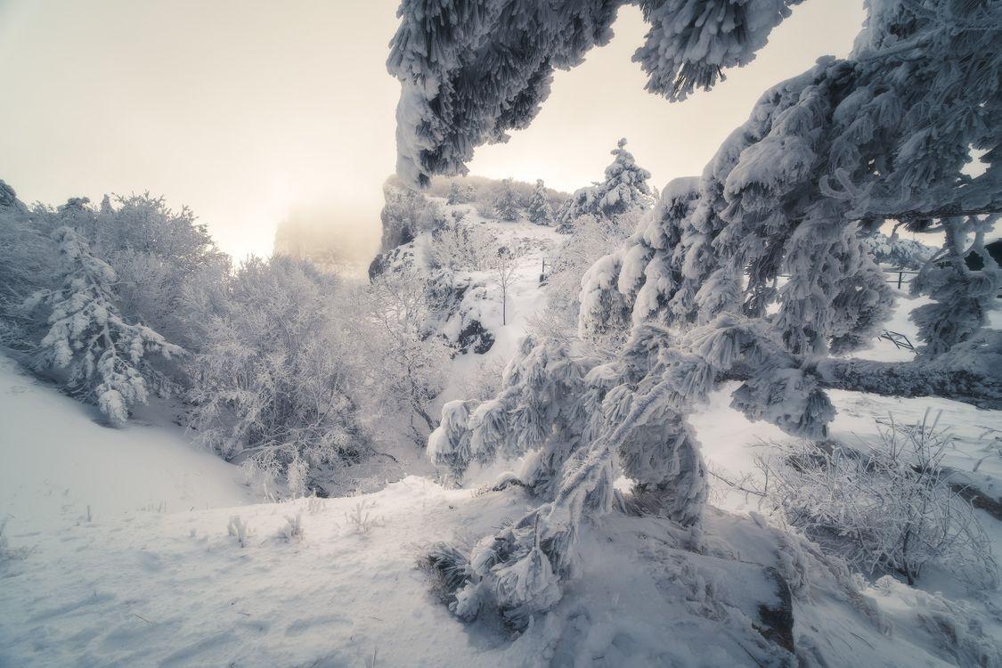 Зимняя сказка в Крыму · бесплатное фото