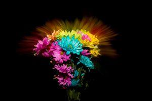 Бесплатные фото цветы букет,хризантемы,красивый букет,флора,цветочная композиция,чёрный фон